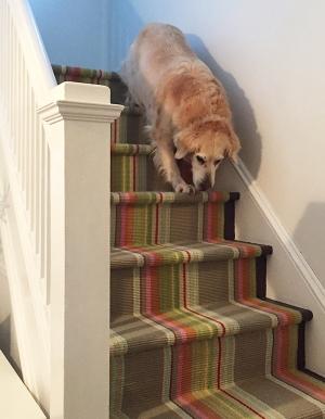 stairrunner_12